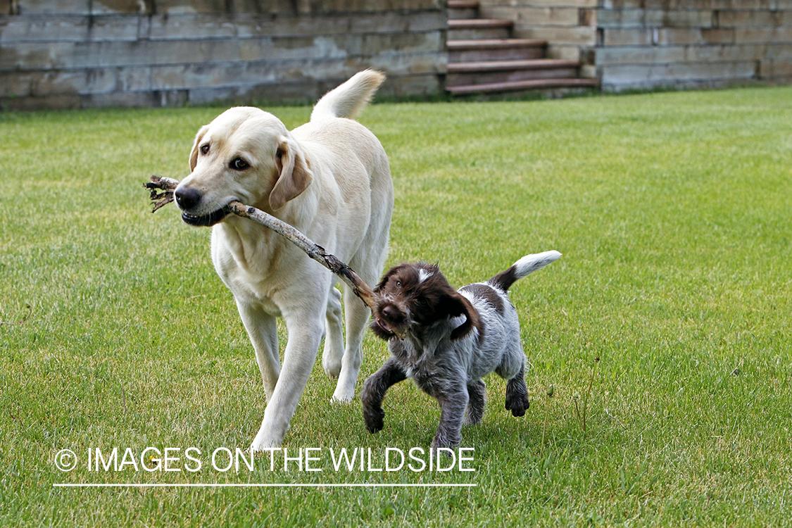 Denver Bryan Images On The Wildside